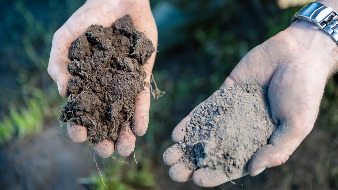 Características suelo plantas