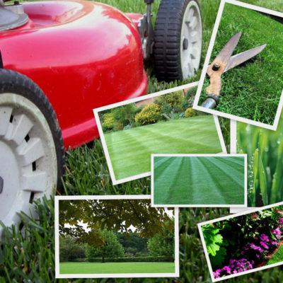 Razones para Contratar una Empresa de Jardinería