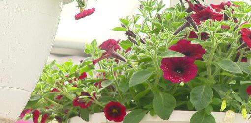 Foros de jardinería