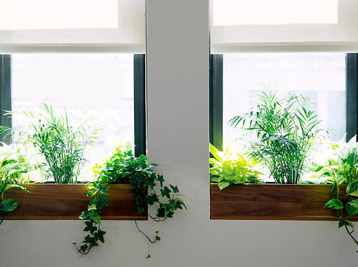 Influencia de la orientación en las plantas