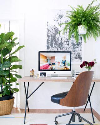 Influencia de las plantas en la creatividad