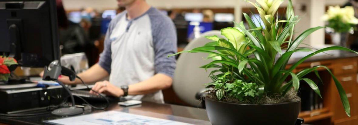Influencia de las Plantas en la Productividad