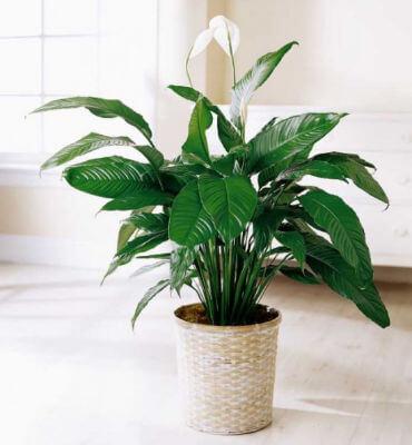 Influencia de las plantas saludables