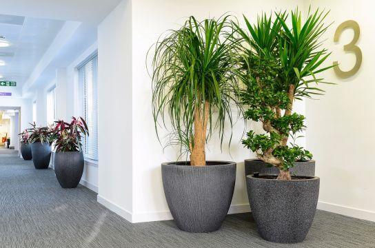 Mantenimiento de Plantas Naturales