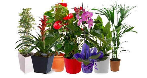 Necesidades de las plantas