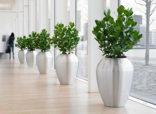 Elegir plantas adecuadas