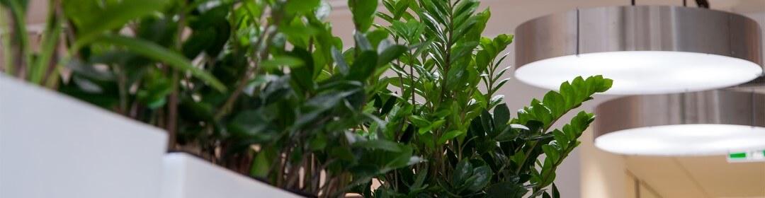 Las plantas ejercen un efecto positivo
