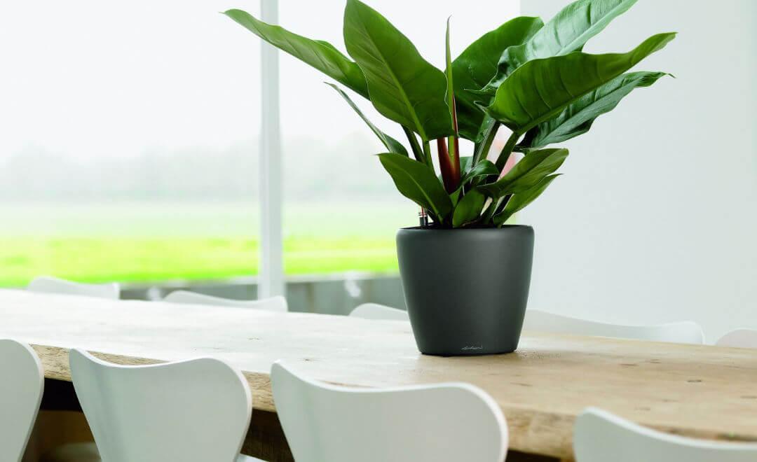 Plantas de interior naturales