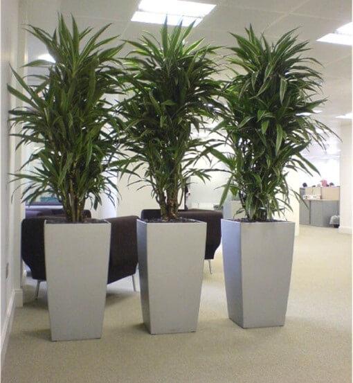 Plantas de Interior en Oficinas