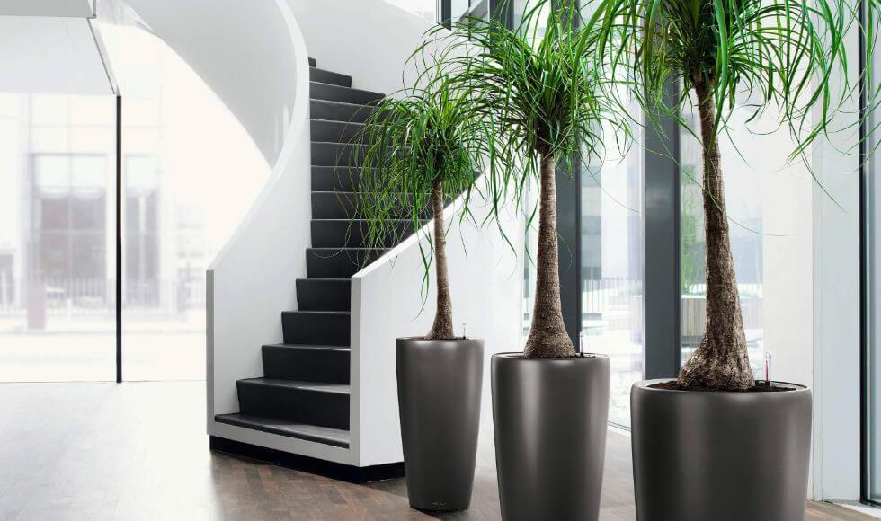 Plantas Naturales para Oficinas