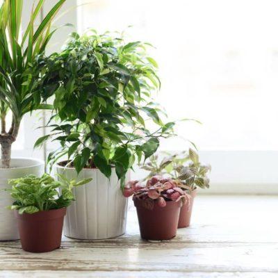Uso Correcto de Fertilizantes